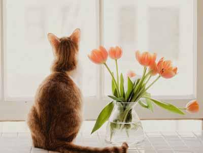 在安静中盛享人生的清凉