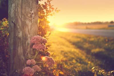 幸福只会迟到,但永远不会缺席