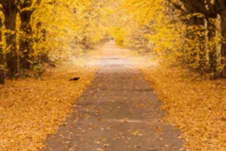 秋天里的童话
