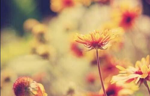 等你拈花一笑,寂静欢喜,相伴天涯
