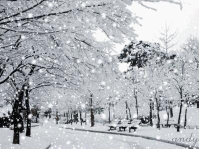 找个人,陪你看这漫天飞雪