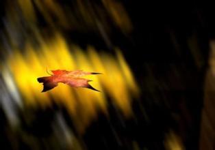 捡一枚落叶入秋