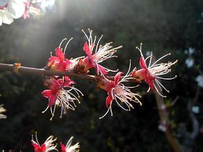 昨日犹如盛开的花,悄然凋零