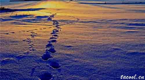 最清晰的脚印,踩在最泥泞的路上