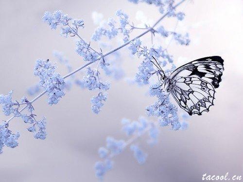 从心出发,活得适意而满足,求仁得仁,是谓幸福