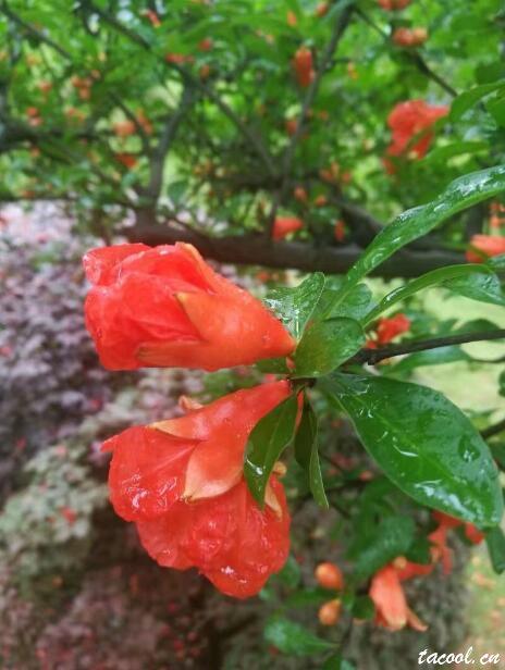 雨中的早晨