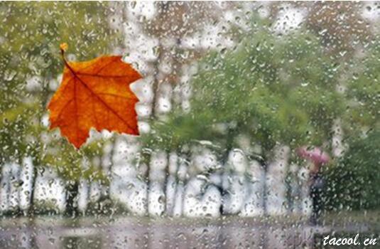秋风秋雨秋意浓