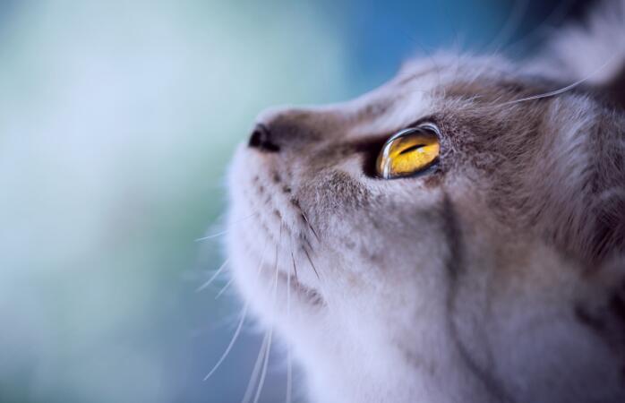 随笔300字_随笔:猫