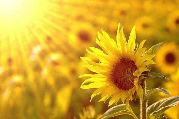 心向阳光正能量的句子