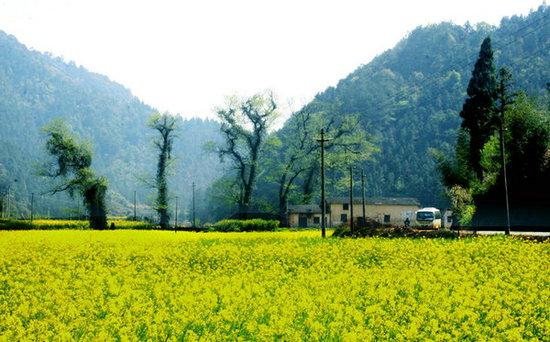 描写乡村美景的句子及图片