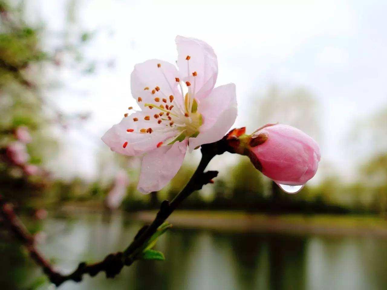春雨缠绵,缠绵出一种离愁