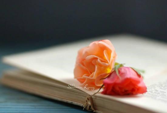 关于书香的句子