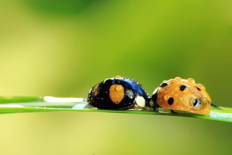 昆虫记好词好句摘抄