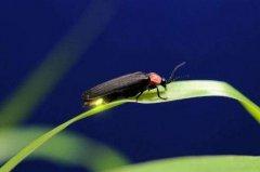 昆虫记第一章读后感