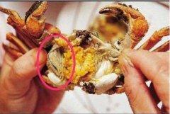 """吃螃蟹时候要注意的""""六不"""" 螃蟹不能吃的部位"""