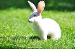 小白兔冷笑话大全系列 4个全