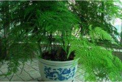 植物观察日记400字5篇