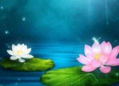 描写莲花的诗句