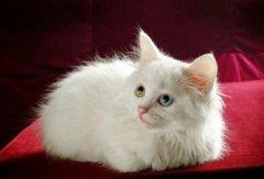 描写小猫的外貌的片段50字100字