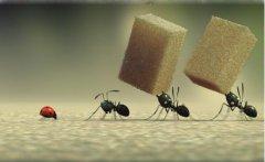 蚂蚁吃什么食物 喜欢吃甜食还是咸食