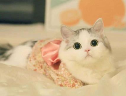 在抖音,如何捧红一只猫