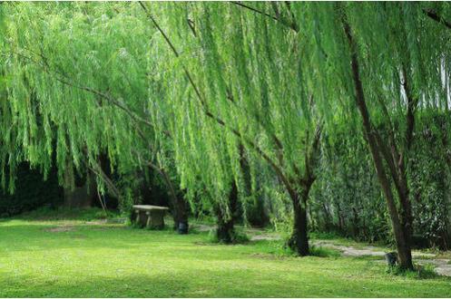 踏着一条幽径,独自走进绿色的环抱