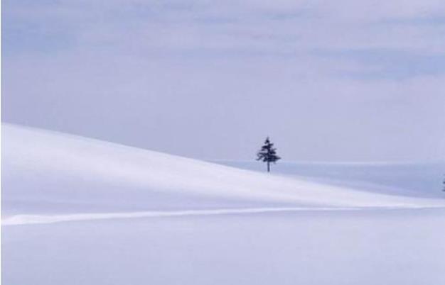 阳关雪(读书笔记)