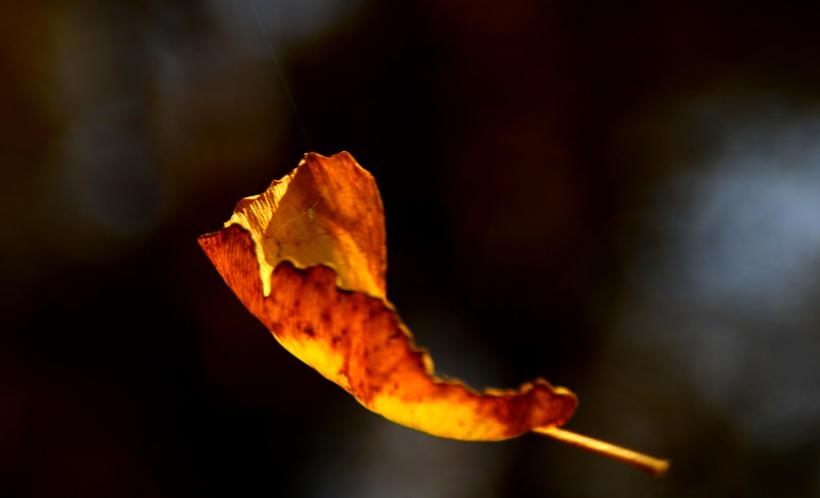 江淳:秋天里忧郁的光