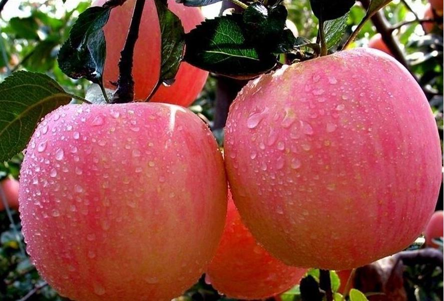 至少还有一枚苹果